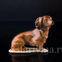 Статуэтка собаки из фарфора Такса, Alka Kaiser, Германия, вт. пол. 20 в.